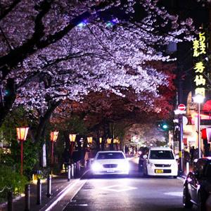 Japanese 1 Image